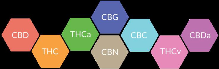 cannabinoidgraphic_